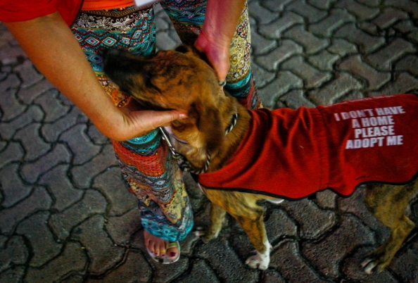 "The first spotting of Zenzi being walked along 5th Ave in Playa Del Carmen. Each night volunteers from the shelter walk a group of adoptable dogs along 5th to inform locals and tourists of the shelter. Zenzi definitely picked us. He ran up to my husband, and it was love at first sight. The next day, we went to S.O.S el Arca, located in Playa, in a space behind the local fire station. We took him to our rental for a ""trial"" run, and never brought him back."