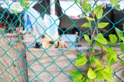 One of the many faces of the shelter, looks out from one of the main kennels.
