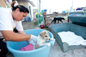 After being rescued from a garbage can, a puppy is treated for an infection by one of the S.O.S staff.
