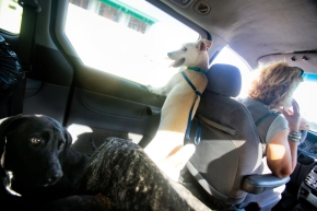 A typical Monday afternoon for S.O.S el Arca shelter president Sylvie Goetz, driving in her van, traveling to the vets office with dogs from the shelter in need of various levels of care. For some, a simple spay or neuter job. For others, tending to broken bones, infections, and disease. The vet used by S.O.S does all the work pro bono.